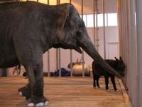 Поездка в Старооскольский зоопарк