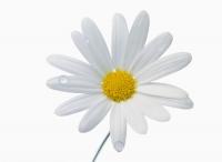 Дни благотворительности «Белый цветок»