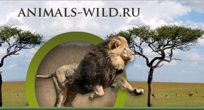 Проект «Животный мир»